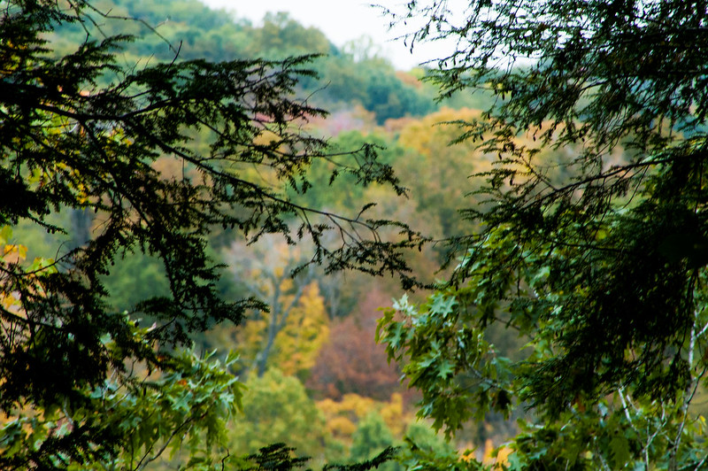 Hemlock Bluff Nature Preserve - October 11, 2014
