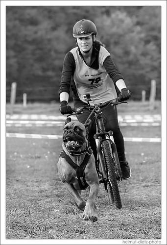 Zughundsport oder Schlittenhundesport - egal, wenn's Spaß macht