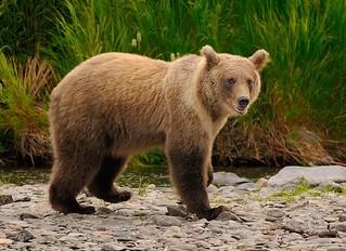 Russian River Kenai Alaska