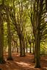 Lane of trees