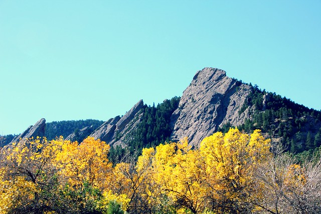 Box elder at the Flatirons, Boulder, CO