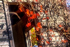 Leaves over the ghost window