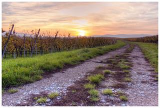 Le vignoble de Balbronn et de ses environs