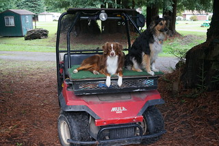 These dogs never left their owners golf cart!