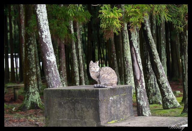 Árboles y gato en Furnas