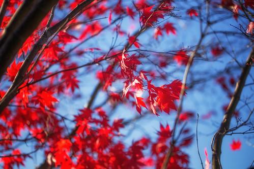 2014-10 Fall-0234-Edit