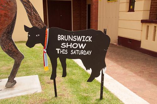 BrunswickCows-2