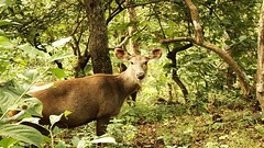 Satmaliya Deer Park - Dadra and Nagar Haveli