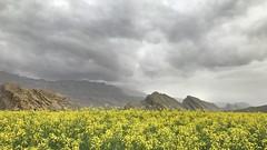 Kazeroun, Iran