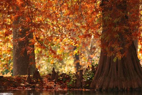 park ohio red lake landscape cypress
