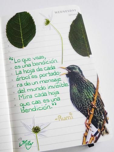 RUMI : )