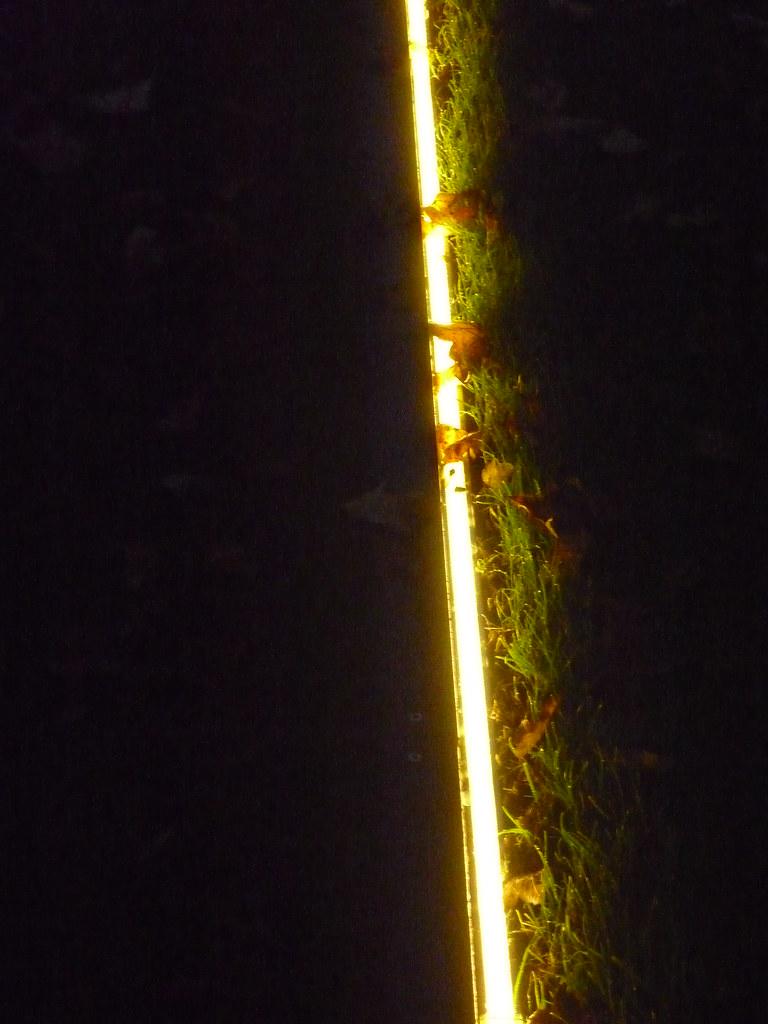 Flickr Photos Tagged Gartenbeleuchtung Picssr