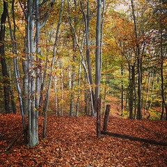 Remy's forest. #nature #autumn #fall #woods #adventure #equilibrium #trail #hiking
