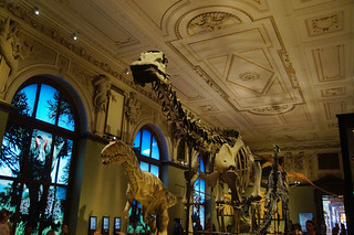 024 Naturhistorisches museum