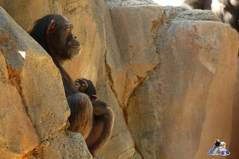 Los Angeles Zoo 106