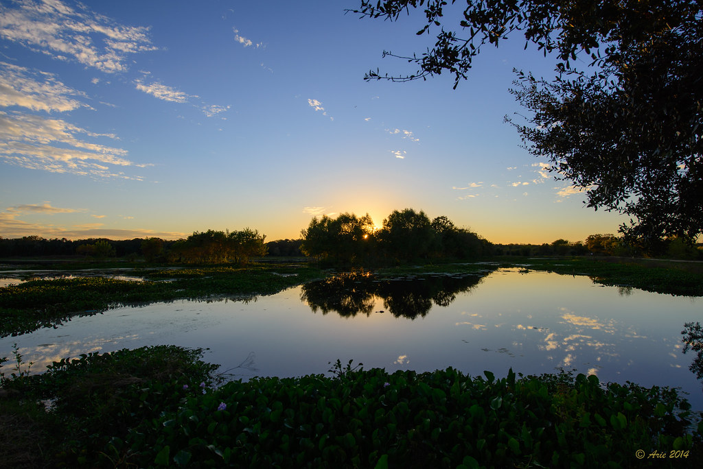 40 Acre Lake in Brazos Bend State Park