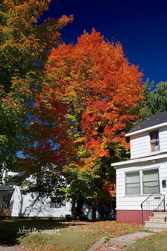 wisconsin fallcolor september mapleleaves 2014 ricelake canon2470l barroncounty september2014