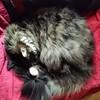 Hunter's spiral nap