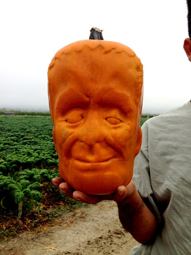 pumpkinstein_Halloween-special_pumpkins_4