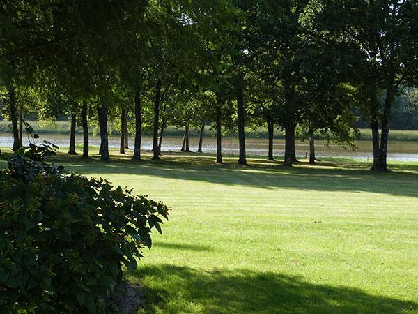 arbres et étang