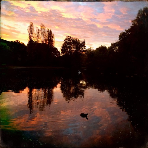 park morning trees sky lake reflection water sunrise munich münchen dawn duck pond schwabing schwabingersee schwabingnord