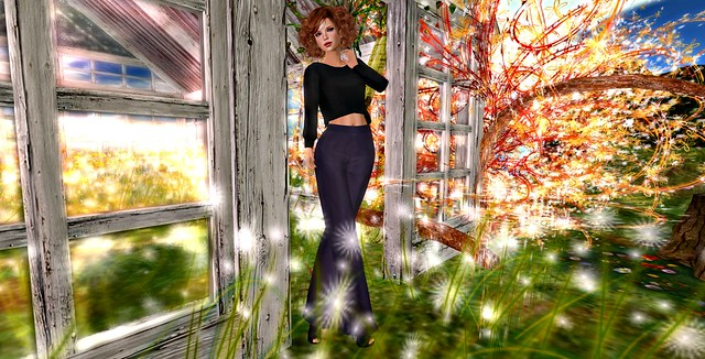The Magic Greenhouse