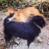 Só vira-latas #viralata #cachorro #dog #serranegra #saopaulo