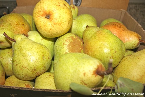 Fall pears.  Perfect for pear tarts!