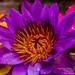 Colours and Nature - වර්ණ සහ ස්වභාවිකත්වය by Dilan Damith Prasanga's
