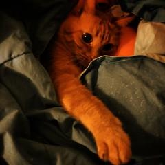 #cute #love #sweet #instacat #a_world_of_cats #pet #dailycat #instapets #bed #cat #catlovers  #photooftheday  #catsofinstagram #cats #catstagram #catlover p#gatlover #kittengram #kittens #kittenlovers #instancat #catsagram  #ilovecat #instajesolo #sweethe