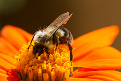 insects-10-25-2014-57.jpg