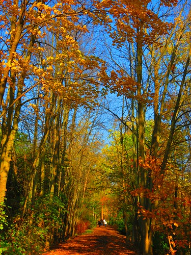 palettalakefrontpark burlington ontario canada lakeontario fall fallcolours seasons autofocus level1photographyforrecreation