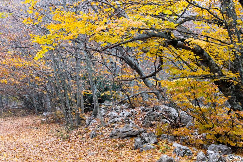 Холодной осенью в заброшенном парке фото 147-279