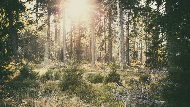 Oberharz Natur