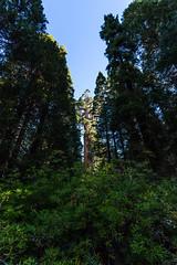Kings Canyon & Sequoia - 35