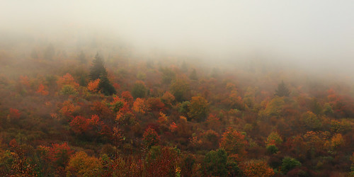color fog blurry northcarolina northcarolinamountains shiningrock canon1635mmf28 durinsday canon6d shiningrockwildernessarea