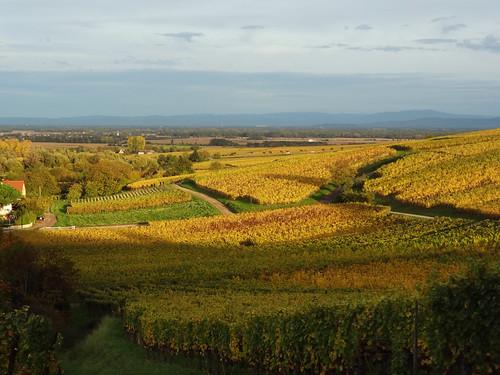 autumn france automne landscape vineyard europe alsace paysage vignes hautrhin hunawihr michelemp
