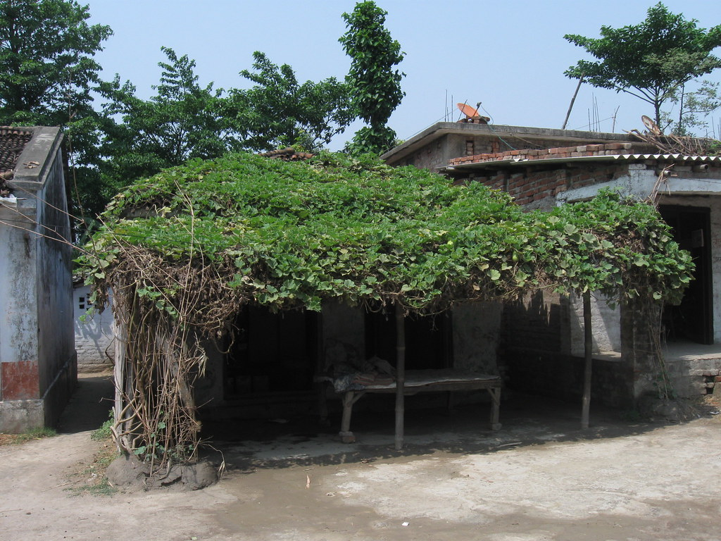 Traditional green roof in Bihar,