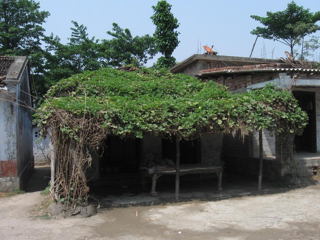 Traditional green roof in Bihar,
