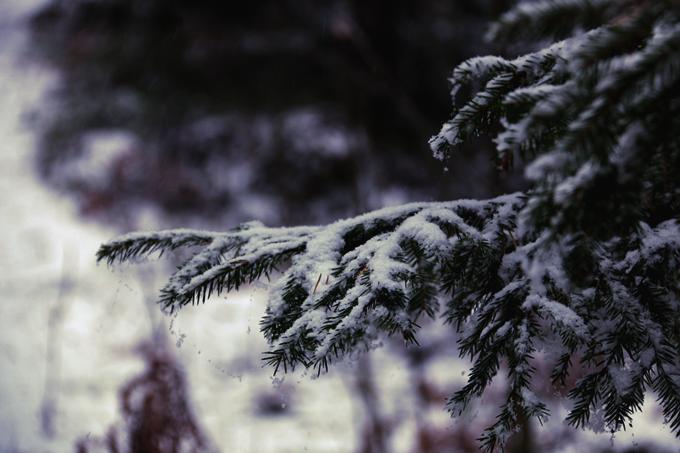 talvi 166