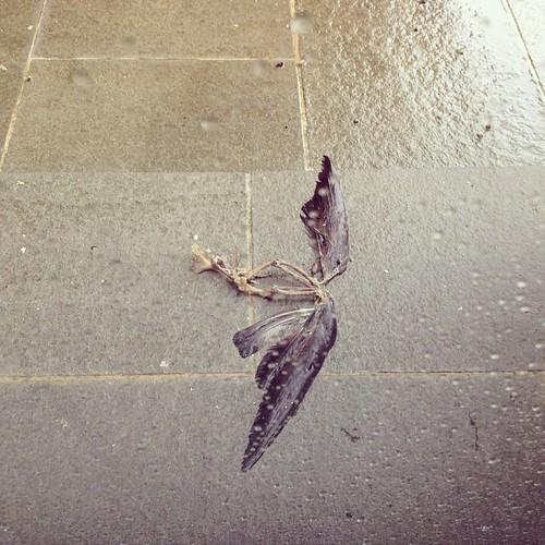 Scheletri portati dalla pioggia #stranoautunno #giriingiro #viaggioinromagna