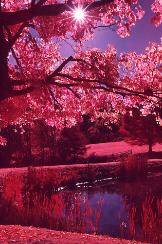 trees light red lake color film nature leaves rural 35mm landscape ir 50mm pond natural pennsylvania side country slide pa infrared epson positive expired e6 nikonn90s honesdale afnikkor50mmf14d dyberry kodakaerochrome epsonv600 epsonperfectionv600