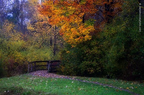 park autumn ny newyork fall colors leaves outdoors buffalo path birdsong hike foliage trail boardwalk orchardpark
