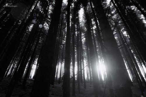 trees sunlight nature weather mono hills lensflare hillwalking northwales moelfamau