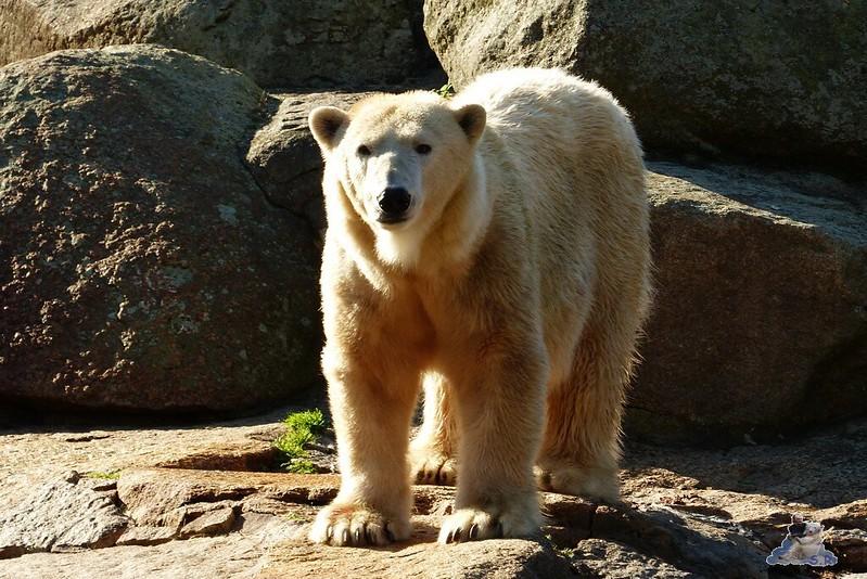 Berliner Zoo 110