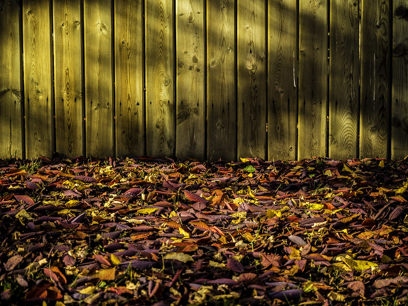 leaf us alone021