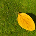 Yellow Leaf and Moss