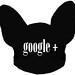 ikona google