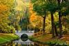 "Polish ""gold autumn"""