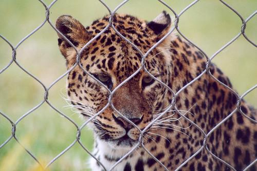 zoo-captivite.jpg